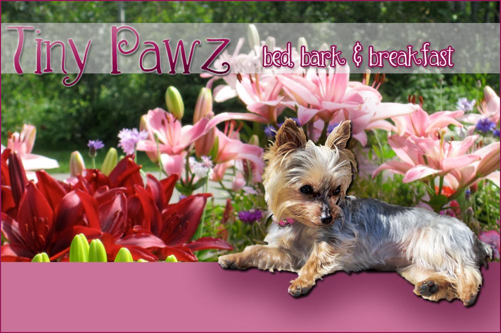 Tiny Pawz Bed, Bark & Breakfast